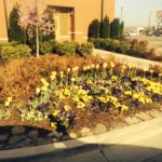 R&D Lawn Care Landscaping Joplin MO Landscaping