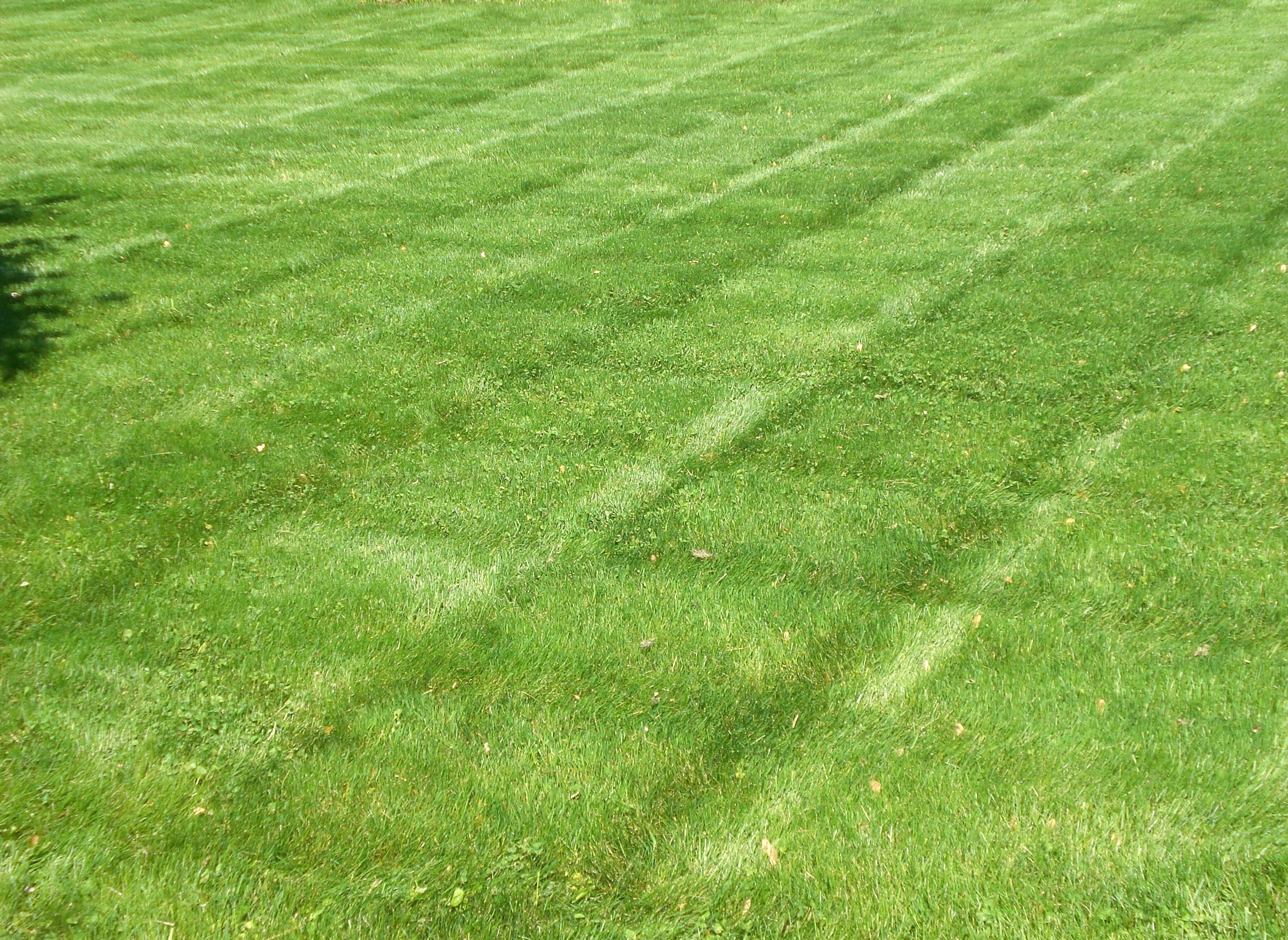 Fresh How to Care for Your Lawn