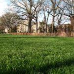 Lawn Fertilizing Joplin MO