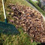 Leaf Removal Joplin MO