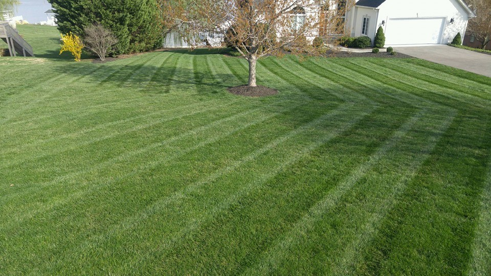 r-and-d-residential-lawn-care-sod
